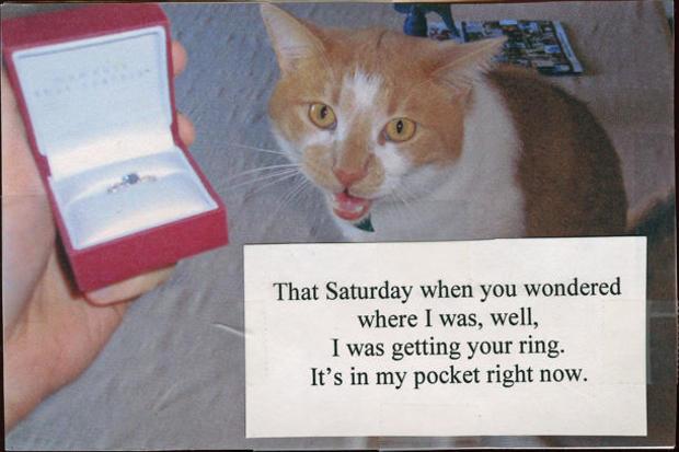 postsecrets-postcard-gallery-wedding-ring-cat.jpg