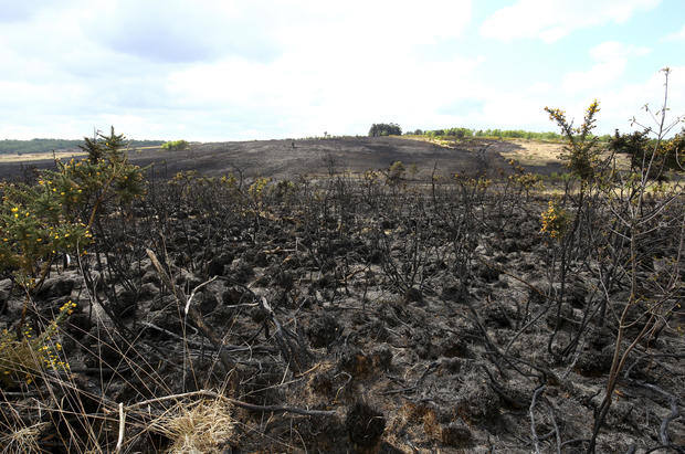 """Hundred Acre Wood: Fire breaks out in Ashdown Forest, in Sussex, England, inspiration for A.A. Milne's """"Hundred Acre Wood"""" in Winnie-The-Pooh"""