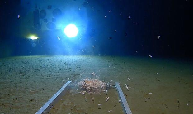 Trash found littering Mariana Trench in deepest-ever submarine dive