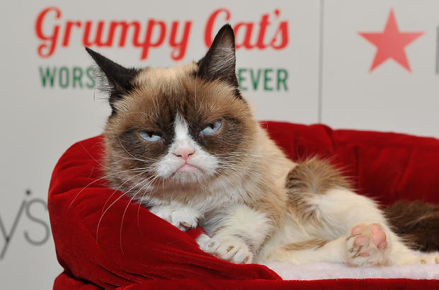The worst Christmas of Grumpy Cat of all life