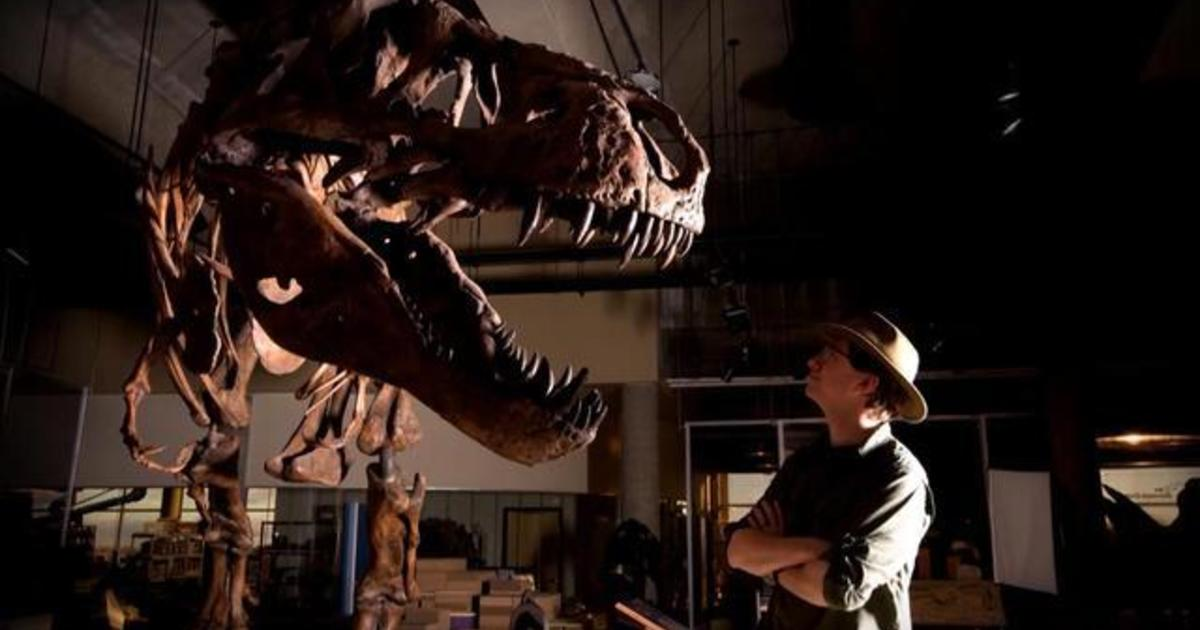 Scotty, largest T. rex ever found, on display in Canada