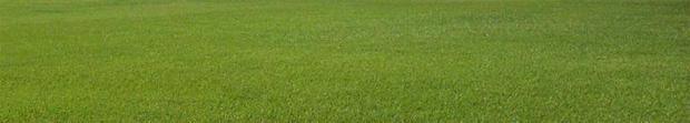 grassy-lawn-usda-620.jpg