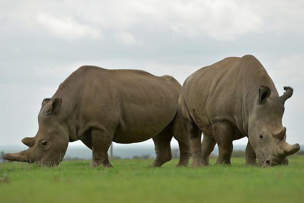 DOUNIAMAG-KENYA-ENVIRONMENT-ANIMAL-RHINO