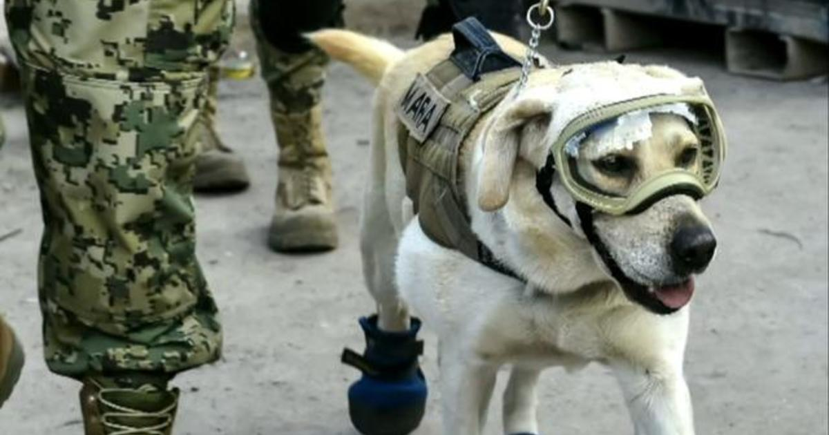 Frida the rescue dog, a symbol of hope after deadly Mexico earthquake, retires