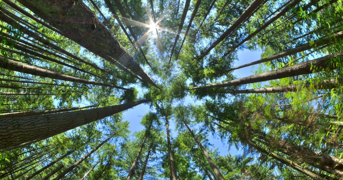 Does planting a tree really offset your carbon footprint?