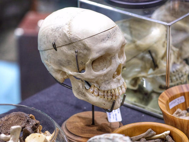 The Oddities & Curiosities Expo