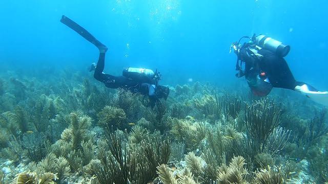 0725-ctm-coralreef-phillips-1898003-640x360.jpg