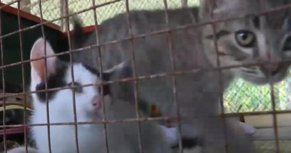 Pit bulls kill 29 cats: Felines fatally mauled by dogs at