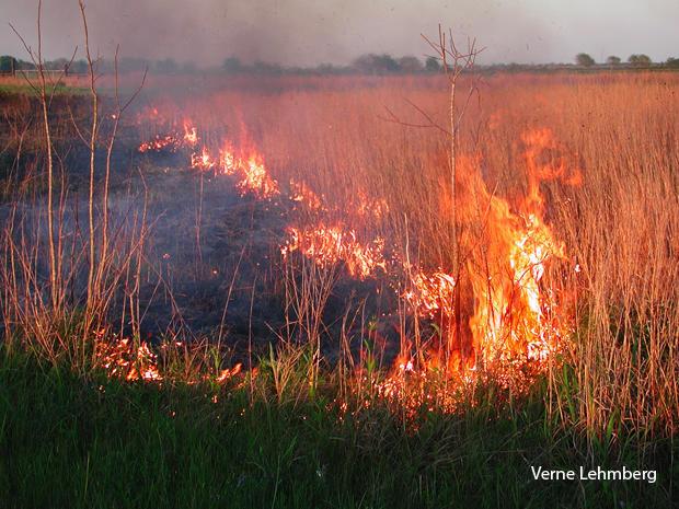 prescribed-burn-in-a-protected-grassland-verne-lehmberg-620-tall.jpg
