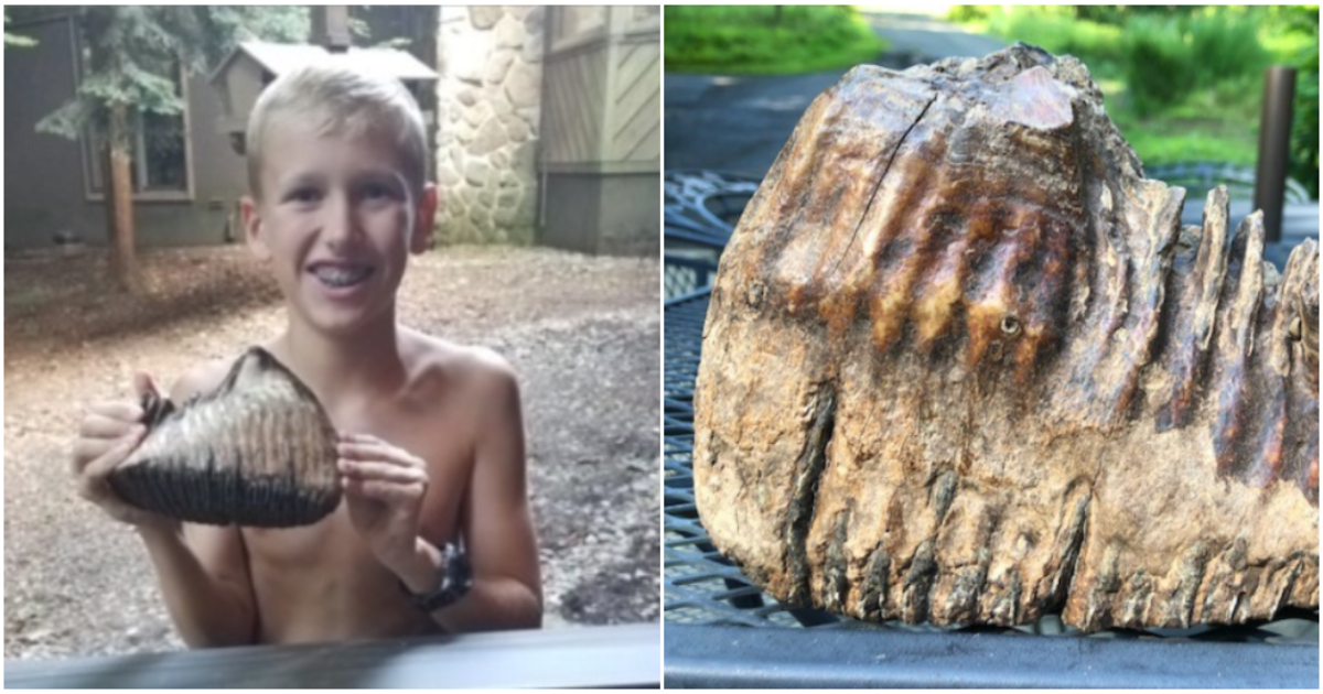 Woolly mammoth tooth: 12-year-old discovers apparent woolly mammoth tooth on vacation in Ohio