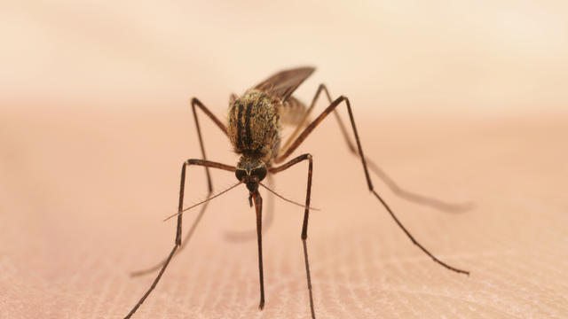 cbsn-fusion-west-nile-virus-reports-spike-in-us-thumbnail-1913627-640x360.jpg