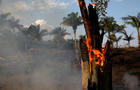 Snake is seen while a tract of Amazon jungle after a fire while as it is being cleared by loggers and farmers in Porto Velho