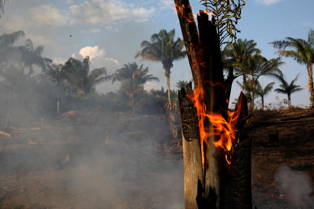Humans Started Record-Breaking Fires in the Amazon Rainforest, According to Environmentalists