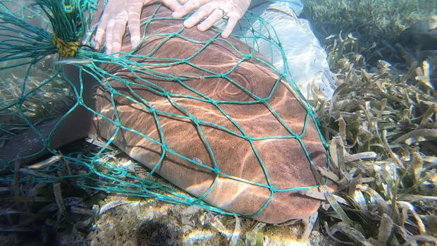 phillips-shark-tagging-082219-newspath-frame-1440.jpg