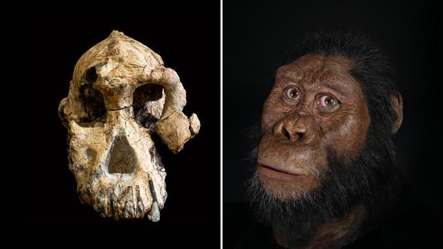 skull-face-split.jpg