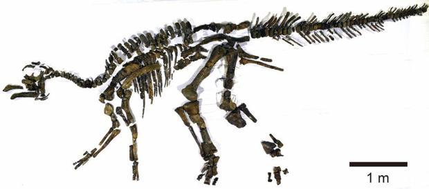 fig3-fossilized-skeleton-1024x452.jpg