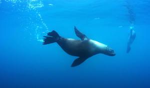 Chilean marine reserve