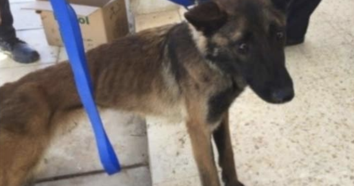 State Department report reveals bomb-sniffing dogs sent by the U.S. to Jordan dying from poor care