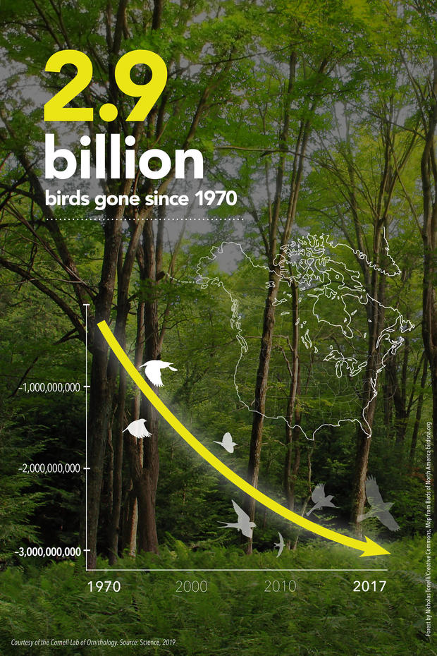 overall-bird-declines-infographic-vertical-format-courtesy-of-cornell-lab-of-ornithology.jpg