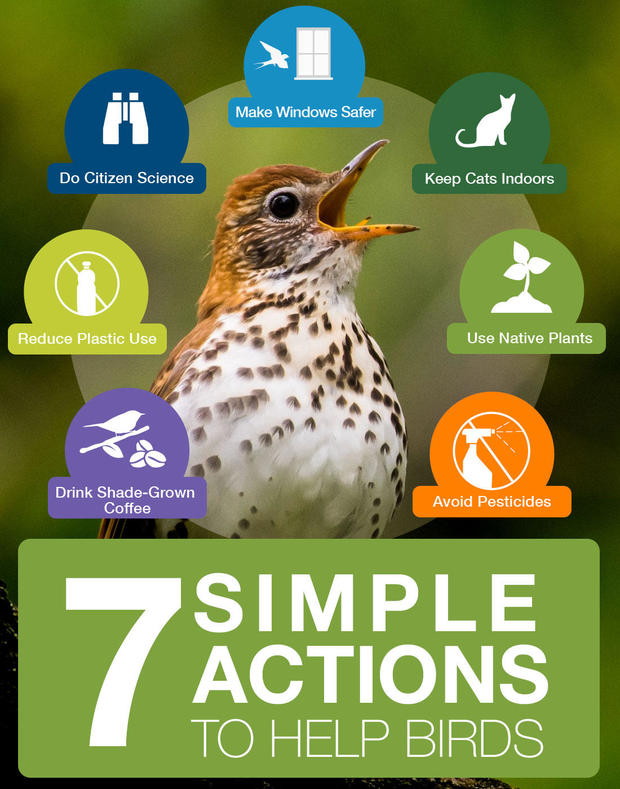 7-simple-actions-save-birds.jpg