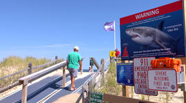 How to be shark smart at Cape Cod