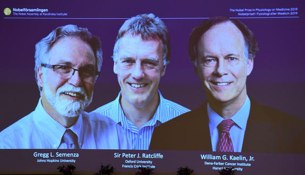 From left to right, the winners of the 2019 Nobel Prize in physiology or medicine, Gregg Semenza of the U.S., Peter Ratcliffe of Britain and William Kaelin of the U.S., appear on a screen during a press conference at the Karolinska Institute in Stockholm,