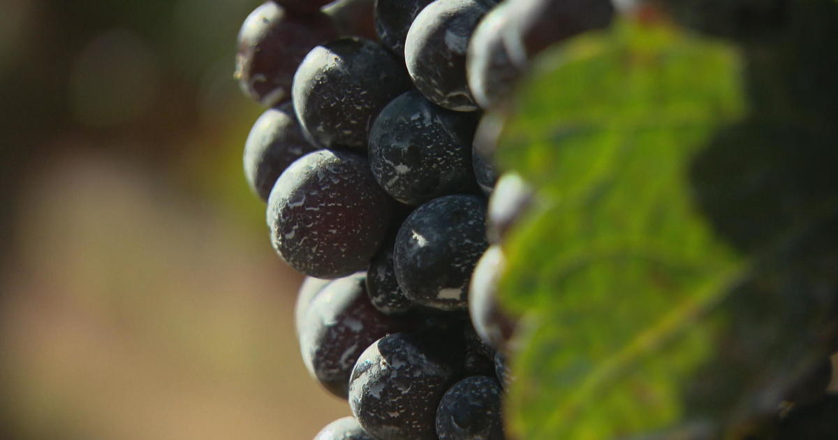 Climate change is coming for your Cabernet