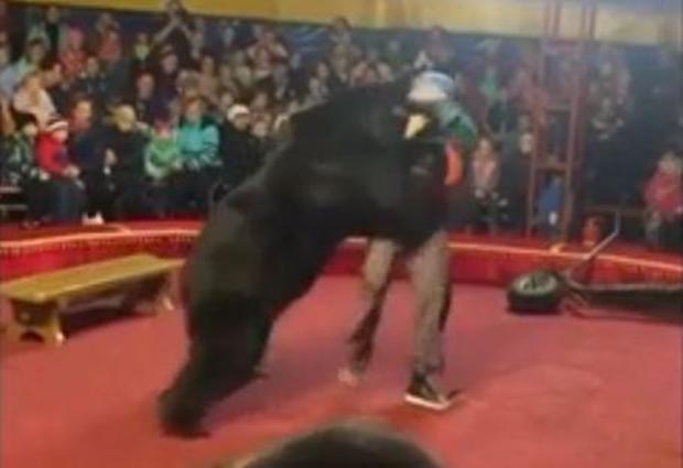 russia-bear-attack-circus.jpg