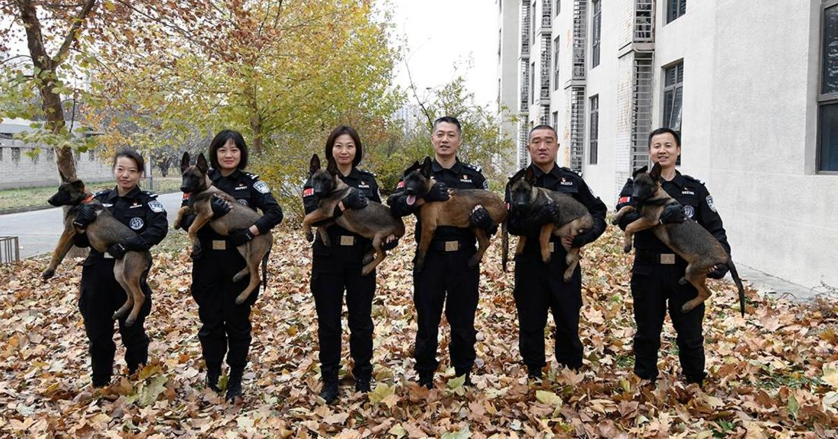 Cloned police dogs welcomed to Beijing's security forces in China