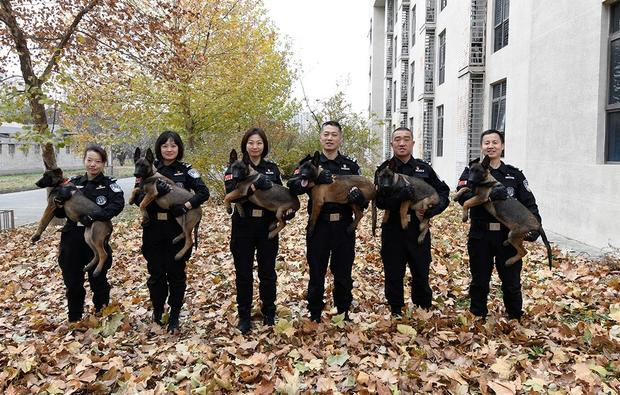 china-police-cloned-dogs.jpg