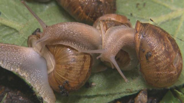 snails-promo.jpg