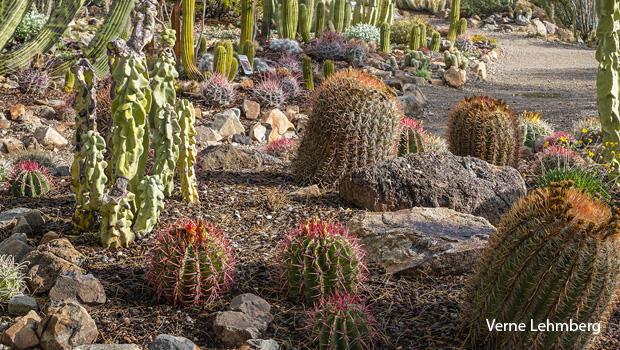 cactus-garden-verne-lehmberg-620.jpg