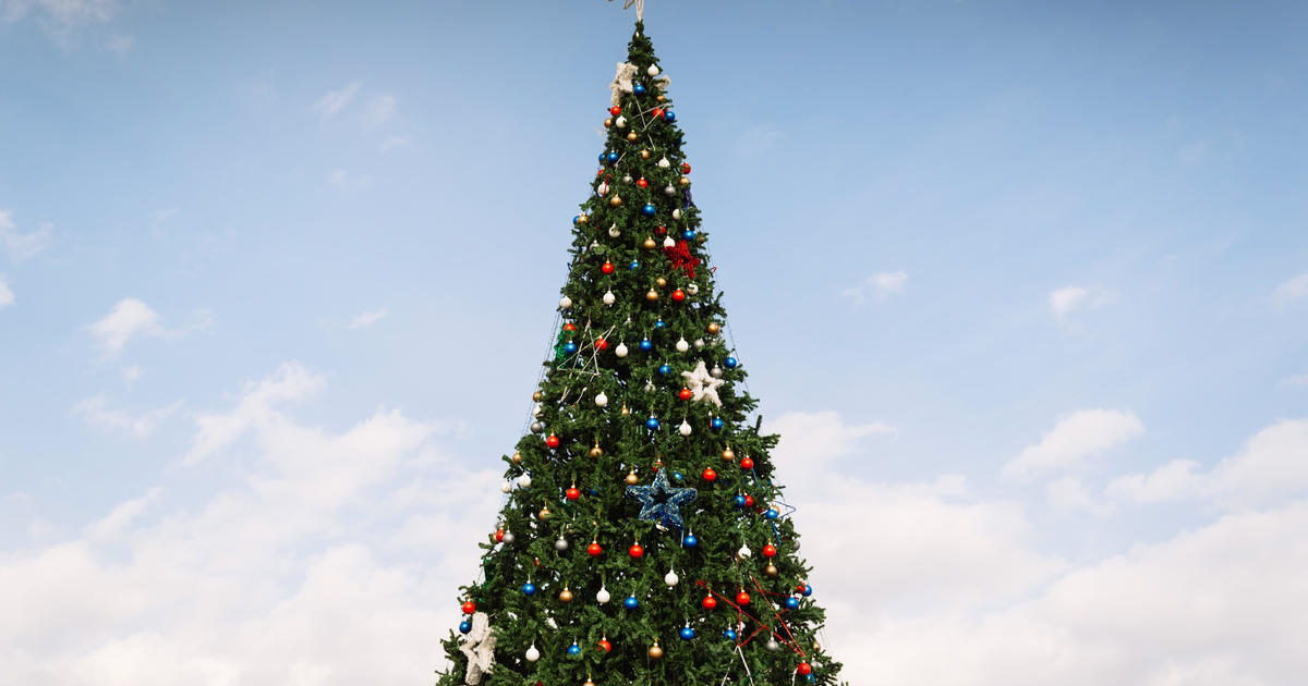 How much does a Christmas tree cost in New York City? Up ...