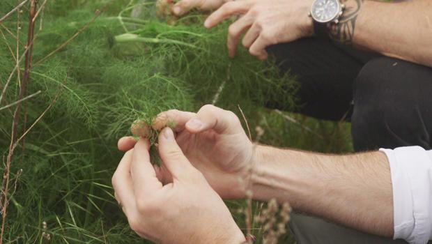 empirical-spirits-wild-fennel-620.jpg