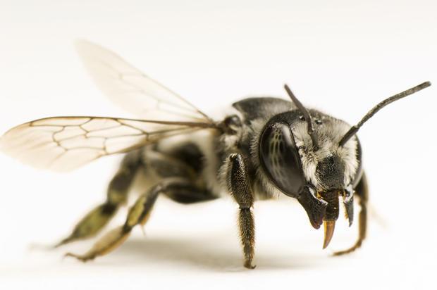 pollinating-insects-joel-sartore-620.jpg