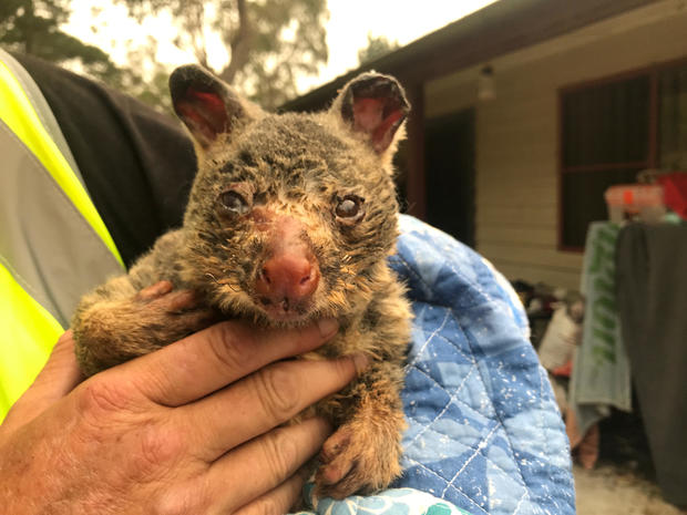 WIRES volunteer and carer Tracy Burgess holds a severely burnt brushtail possum rescued from fires near Australia's Blue Mountains