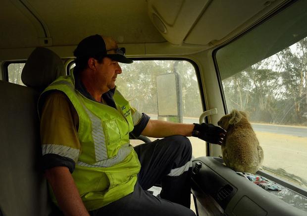 Australian Bushfire Coverage