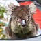 Labour Leader Anthony Albanese Visits Adelaide Koala Rescue