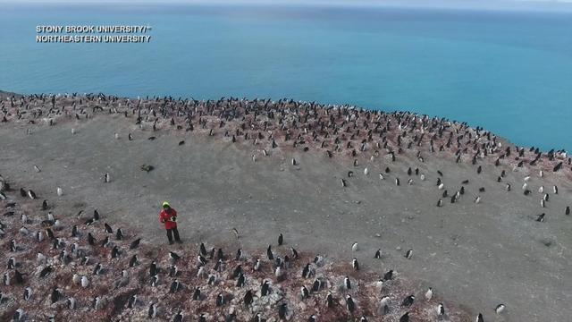 0125-satmo-antarcticaresearch-saberi-2014624-640x360.jpg