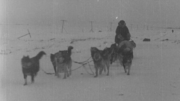 balto-dog-sled-620.jpg