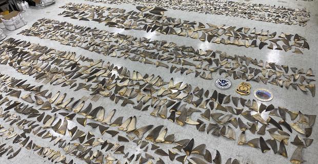 shark-fins-01.jpg