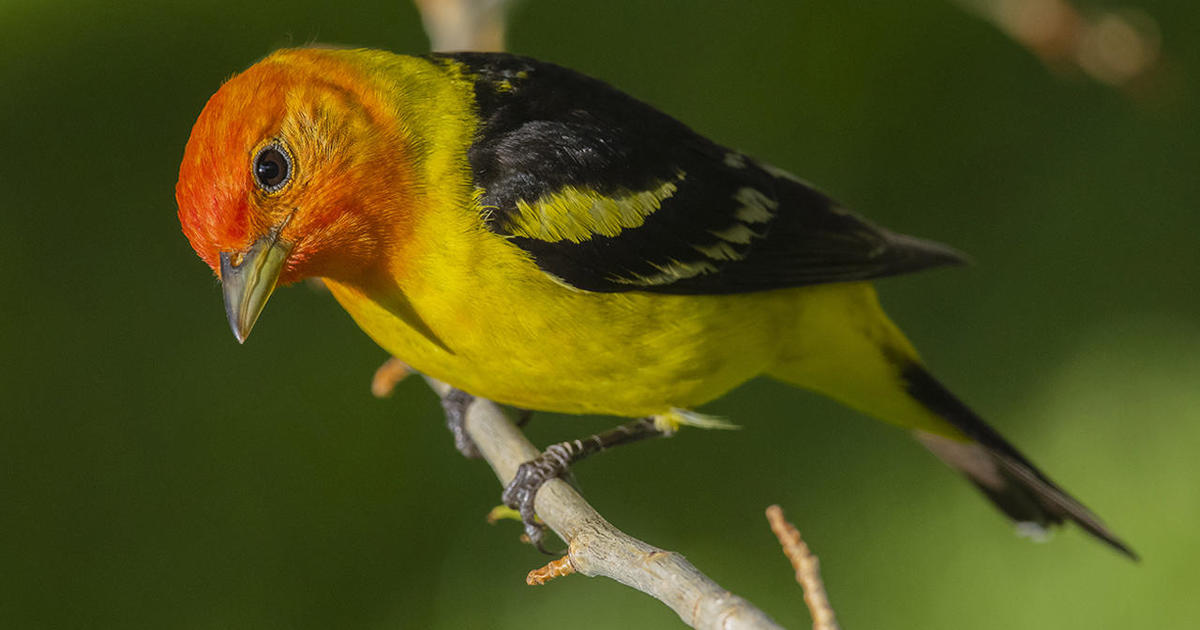 Nature up close: Bird watchers' meccas in Texas