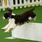 A dog competes during Master Obedience at the 144th Annual Westminster Kennel Club Dog Show in New York