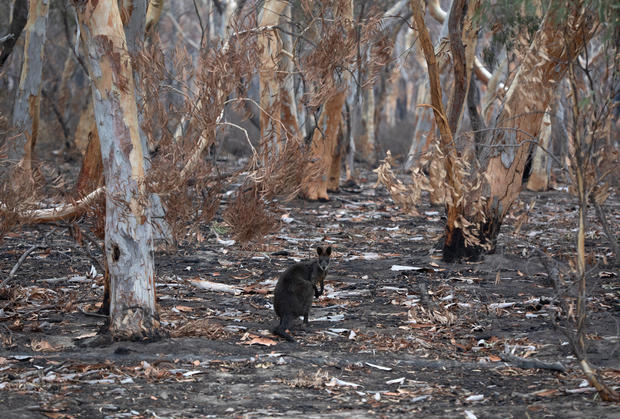 The Survivors: Saving Australian Wildlife Following Fires And Drought