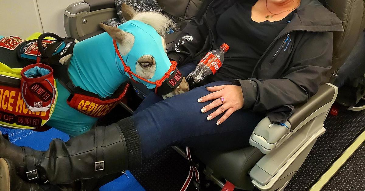 A woman took her 115-pound miniature horse on a plane as a service animal. Now, she's worried it could be his last flight