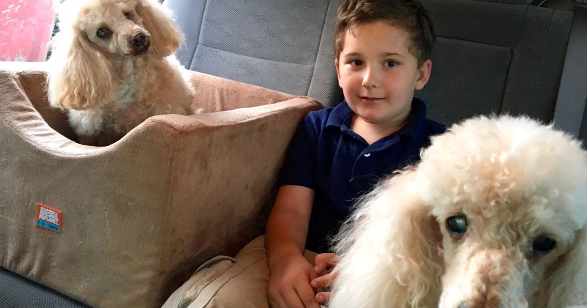 """Adopted boy is on a mission to save old dogs who need a home: """"I know how it feels not to be loved"""""""