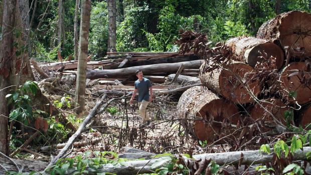 logging-2.jpg