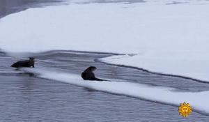 river-otters-sm-2043346-640x360.jpg