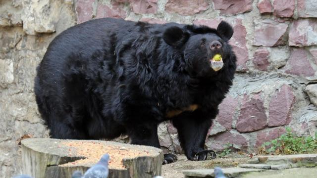 brown-bear-with-chum-salmon-sherri-obrien-promo.jpg