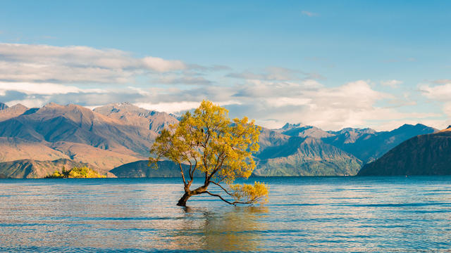 Wanaka Tree, Lake Wanaka at sunrise, New Zealand